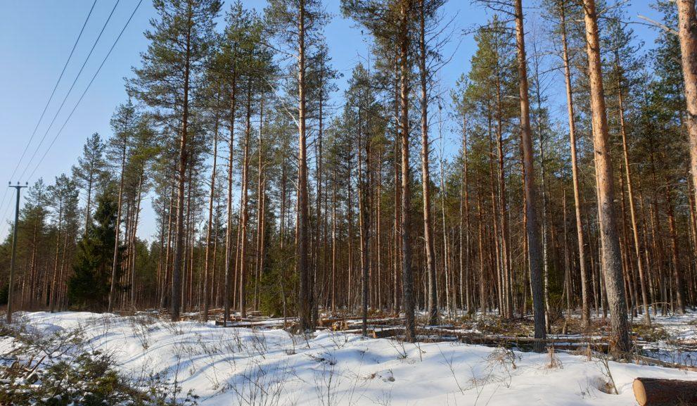 Metsässä ilmajohtoja