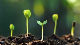 Pienet taimet nousevat mullasta